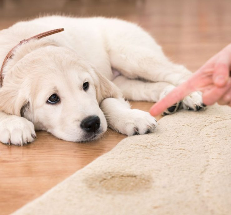 Pet-Accidents-–-How-We-Can-Help-Your-Rugs-